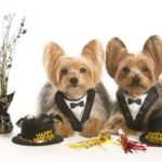 Get Your Pup Ready for the Holiday's with Charlie & Spike's WagSwag