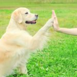 Social Entrepreneurs Launch Chattingpets.com, A Pet-Lover's Community for Individuals, Small Businesses, and Shelters