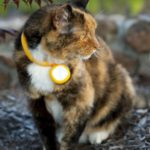 Scollar Smart Collar for Small Dogs and Cats Now Live on Kickstarter