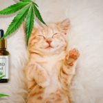Tips for Starting Your Own Business in the CBD Oil for Dogs and Cats Niche