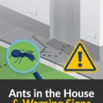 How to Keep Ants Out of a New Add-On